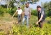 पौधों की नर्सरी दिलाएगी 10 लाख रुपये तक का मुनाफा
